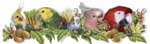 Lafeber papegaaien parkieten